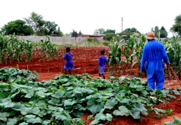 Sustainable Agriculture in Zimbabwe